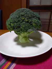 秋野菜ブロッコリーとカリーノケール・コールラビ - 南阿蘇 手づくり農園 菜の風