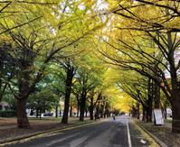 北海道リハビリの旅、北海道大学散歩。 - ゆるゆると・・・