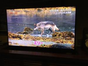 11月1日海の狼エリー『ダーウィンが来た』より - ホップが来た!