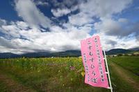 コスモス@三重県菰野町コスモス畑・其の一 - デジタルな鍛冶屋の写真歩記