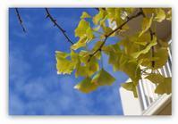 初秋日曜日はゆっくりと。 - 花ありて 日々