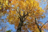 紅葉の白山平瀬道 - yukoの絵日記