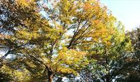 11月2日  「楓蔦黄」の日、折形について - 煎茶道方円流~東京東支部~