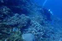20.11.1宜野湾ボートチョイス - 沖縄本島 島んちゅガイドの『ダイビング日誌』
