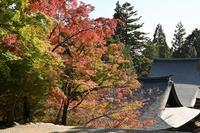神護寺 - Taro's Photo
