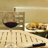 秋の夜長はBar ニャンズでしっぽり - 幸せなシチリアの食卓、時々にゃんこ