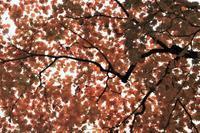 羽黒山出羽三山神社の紅葉 - 「 ボ ♪ ボ ♪ 僕らは釣れない中年団 ♪ 」Ver.1