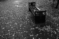 雨の散歩道で20201102 - Yoshi-A の写真の楽しみ
