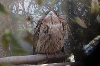 オーストラリア区の多彩な鳥たち(埼玉県こども動物自然公園 ) - 続々・動物園ありマス。