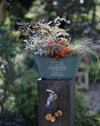 runamint429 さんのお庭でリース作り - ゆきなそう  猫とガーデニングの日記