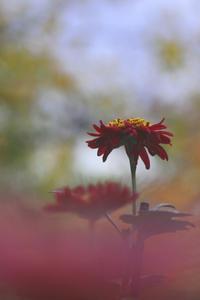 余韻を求めて向島百花園@墨田 - meの写真はザンス
