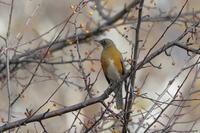 高原シリーズ最終章 - 『彩の国ピンボケ野鳥写真館』