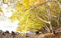 10月の撮影会~紅葉の奥日光~ - 日々の贈り物(私の宇都宮生活)