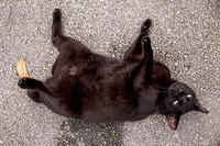 ご近所猫 2020.10.28 - Rayblade Photos