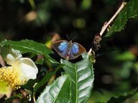 地元で秋の五目撮り - 蝶超天国
