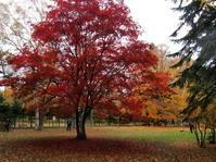 豊平公園の紅葉ほか - 今日の鳥さんⅡ