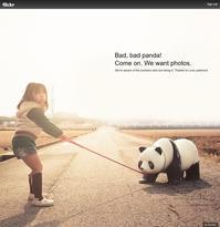 Bad, bad panda! - Darjeeling Days