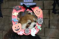 豊橋総合動植物園のんほいパークと浜松市動物園の旅行記を姉妹ブログ「レッサーパンダ紀行」にアップしました - (続)レッサーパンダ紀行