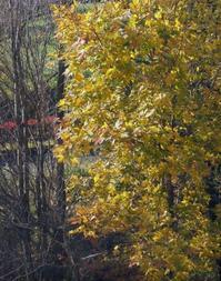 秋から冬へ - 標高480mの窓からⅡ