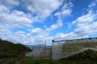 行楽日和 - ~葡萄と田舎時間~ 西田葡萄園のブログ