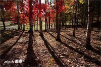 「束の間の紅葉」 - 藍の郷