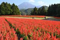とっとり花回廊 - Taro's Photo