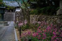 善峯寺の秋明菊 - 鏡花水月