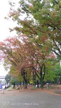 上野界隈 東博へ - ここどんな町