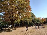 朝霞市秋を探しに青葉台公園に行く。 - 裕介のブログ