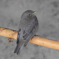 久しぶりの鳥撮り - TACOSの野鳥日記