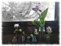 十一月の窓辺 - マリカの野草画帖