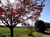 """""""秋""""ソロソロと葉も色好き始めました・・・ - 趣味人の時偶ブログ"""