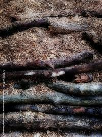 バーク堆肥を積む - Illusion on the Borderline  II @へなちょこ魔術師