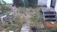 久しぶりの庭作業~ - わらびの庭づくり。時々猫