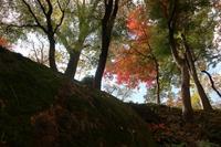 紅葉2020(盛岡城跡公園) - ひとりごと・・・