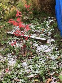 11月4日・・初雪。 - あいやばばライフ