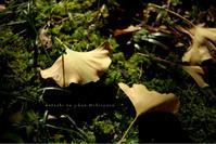 * 銀杏の葉 - わたしの時間