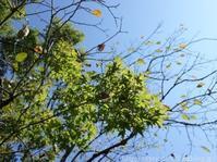来年の春に向けて…宿根草の植えかえと苗の植えつけ3 - シンプルで心地いい暮らし