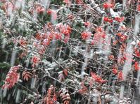 初雪 - 小さなお庭のある家3