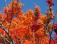 紅葉と季節のキルト - Quilt Mary's
