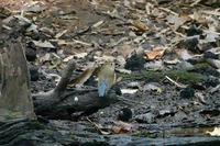 近場3公園でのバードウォッチング(2020.10.27,30,31) - 週末バーダーのBirding記録