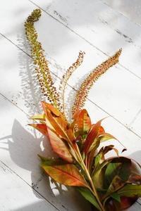 萌えるダリア二種と紅葉のコンポジション - お花に囲まれて