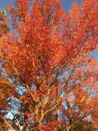夕紅葉きれい - 花の自由旋律