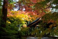 長野市昌禅寺さんの紅葉 - 野沢温泉とその周辺いろいろ2