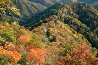 おにゅう峠、紅葉と雲海 - 朽木小川より 「itiのデジカメ日記」 高島市の奥山・針畑からフォトエッセイ