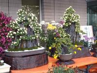 満開の菊花展 - はりねずみの日記帳
