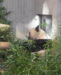 パンダに会いに行ってきました♪ - green floral (旧green diary)