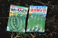 豆蒔き<豌豆> - 風のむろさん 自然の詩