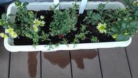 ボランティアプランターにパンジーとチューリップ - ウィズ(ゼロ)コロナのうちの庭の備忘録~Green's Garden~
