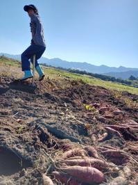 菜の風秋のお野菜セットのご案内 - 南阿蘇 手づくり農園 菜の風